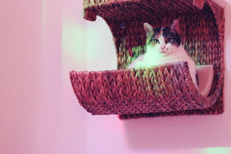 Cute little luzi Beautiful ♥ Ourcat Pets Indoors  Taking Photos LUZI Luzier1