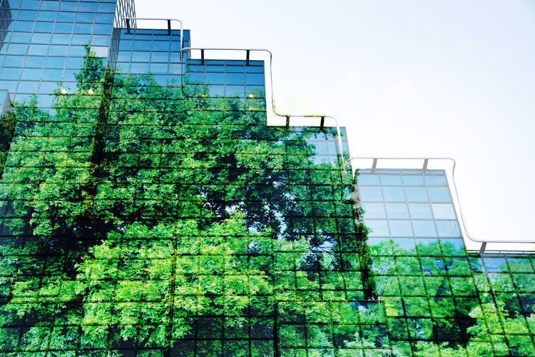 Low angle view of plants by building against sky