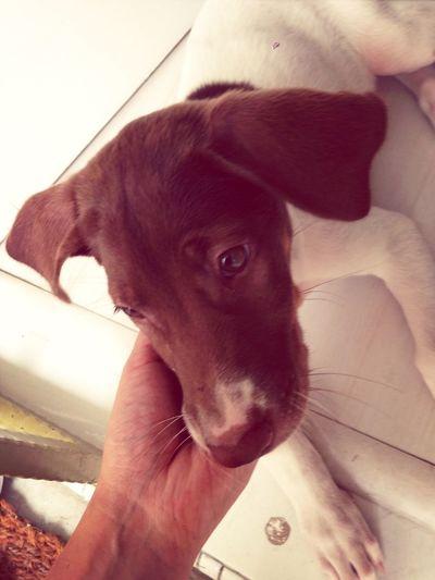 Meet Freckles