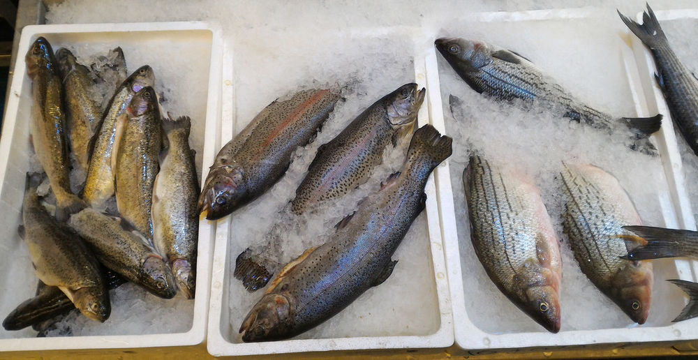 High angle view of trout and salmon with sea bass fish on ice for sale
