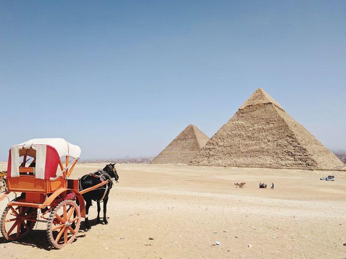 Horse carriage on desert