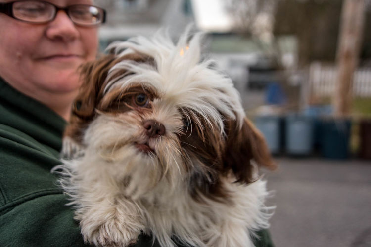 Cute Canine Close-up Dog Domestic Domestic Animals Focus On Foreground Headshot Leisure Activity Looking Looking At Camera Mammal One Animal One Person Pet Owner Pets Portrait Real People Vertebrate This Is Family