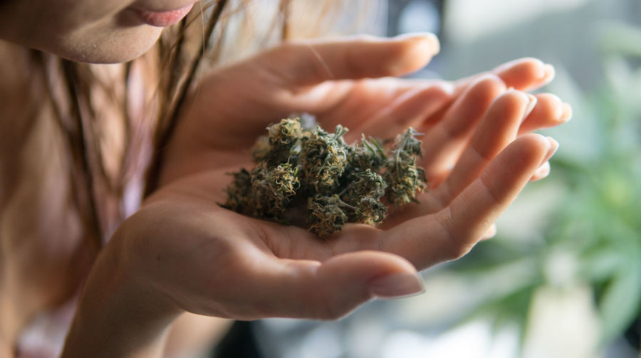 Legalize it! Marijuana strains and medical growing in the world Close-up Marijuana CBD Thc Medical Instrument Legalizeit Sativa Indica Smoking Stoned 420