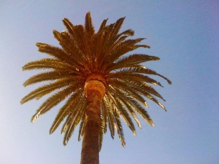 California Low