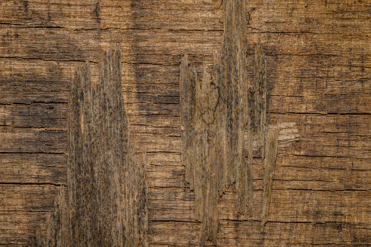 wood - material, pattern, brown, backgrounds, textured, plank, wood grain, timber, hardwood, nature, striped, textured effect, lumber industry, wood paneling, rough, close-up, brown background, no people, knotted wood, full frame, tree, colored background, outdoors, day