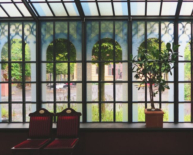 Close-up of potted plants against window