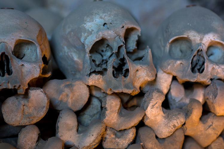 Naples Cemetery Close-up Day Human Bone Human Skeleton Human Skull Indoors