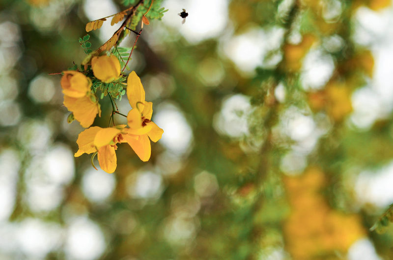 Close-up of yellow flower blooming on tree