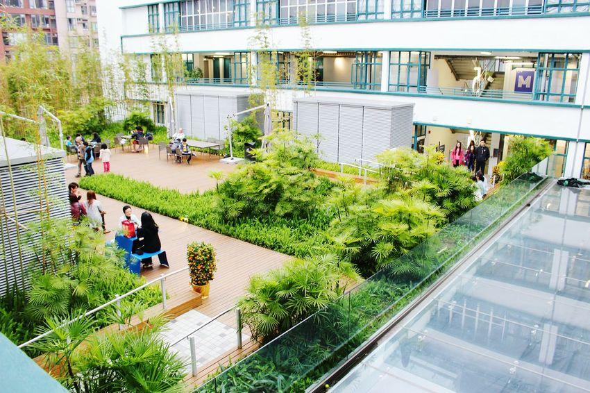 2015 Life In Hong Kong · Urban Urban Nature Resting Place Greenery Nature In The City Hong Kong Enjoying Life