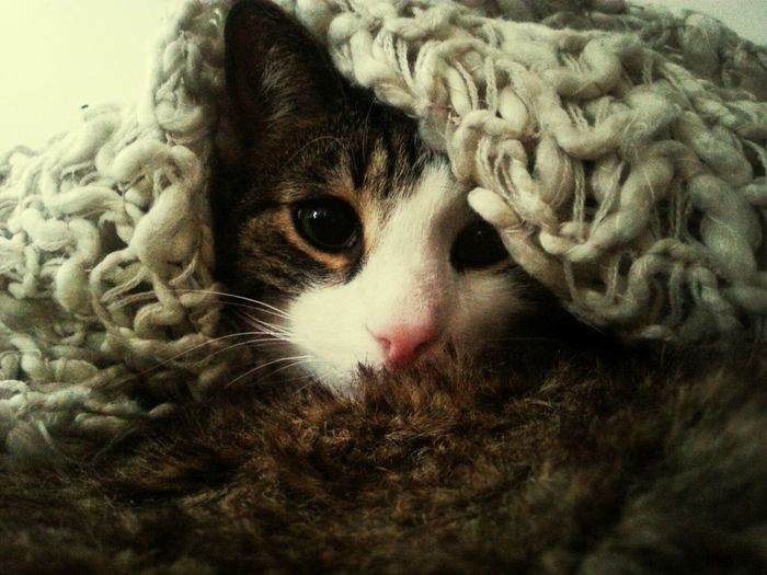 She put a blanky on me. I would be cute she said. Cat So Cute Taking Photos Cosy