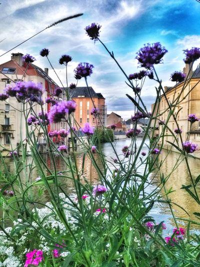 Purple flowers blooming in city against sky