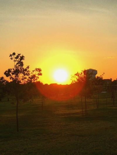 43 Golden Moments Sunset Sunset Lovers Sunset_collection Sunset And Trees Iphone6 IPhone Nature Popular Beautiful Nature Beautiful Trees Lawn Fine Art Photography Adventure Club Showcase July Orange Sky Colour Of Life The Magic Mission