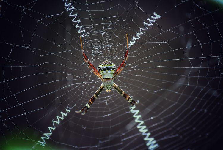 Spider Web Web
