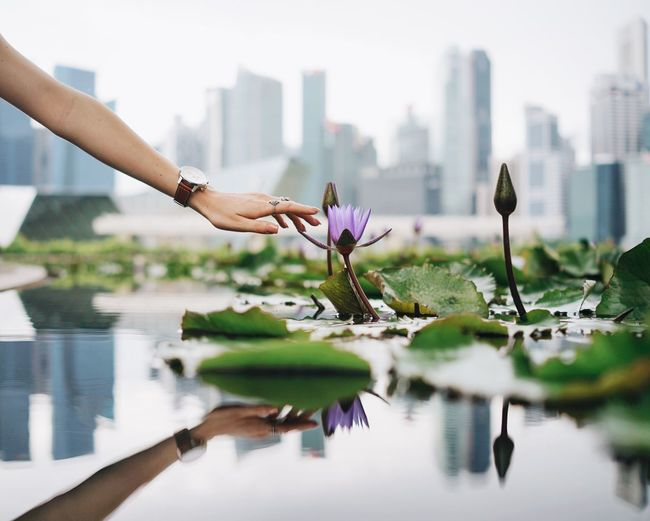 urban greens Flower Water Water Lily City Skyscraper Nature Freshness Hand Hand Of A Girl Skyline Singapore Urban Nature Reflection Reaching Out Plant Growth Lake Beauty In Nature Focus On Foreground Bright Cloudy Day Connected With Nature Touch Wristwatch TakeoverContrast The Architect - 2017 EyeEm Awards Be. Ready. Adventures In The City 10