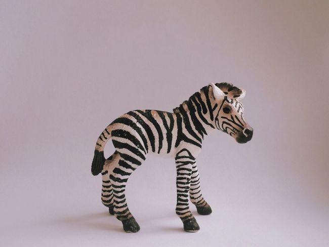 Zebra Toy Childs Play Isolated Plastic