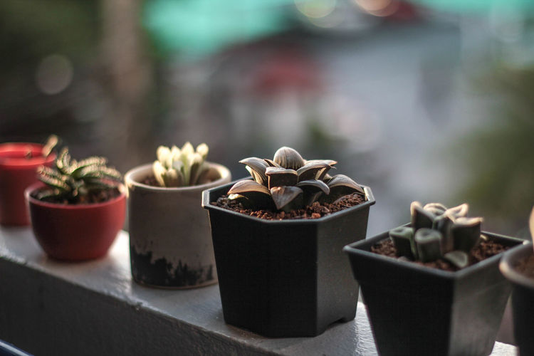 Close-up of succulent potted plants on railing