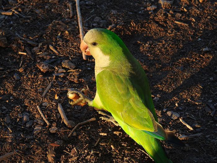 High angle view of parrot perching on field