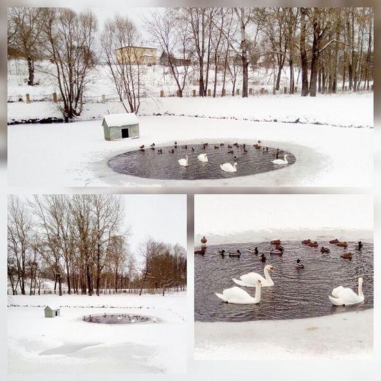Winter Snow Nature Beauty In Nature Russia природароссии прекрасно озеро Duck
