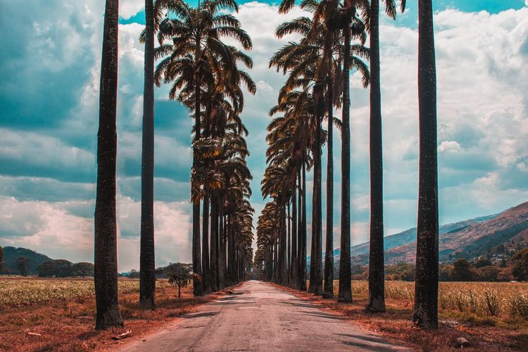 Panoramic View Of Palm Trees On Landscape Against Sky