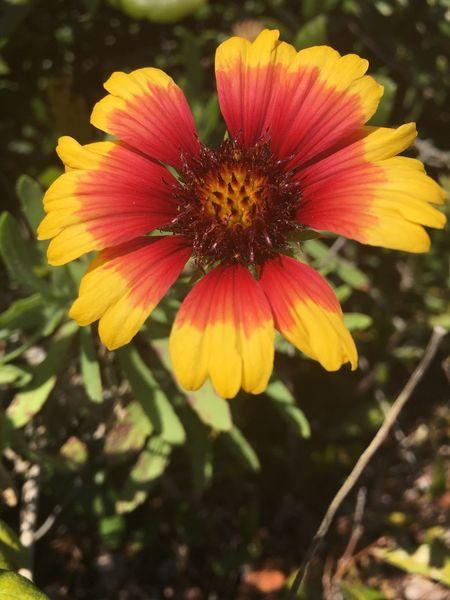 Flower Flowercloseup