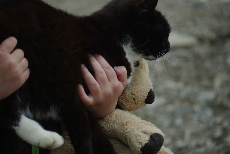 Animal Themes Armful Black Cat Childhood Close-up Day Domestic Animals Domestic Cat Full Of Hands Holding Human Body Part Human Hand Indoors  Kids And Animals  Kids And Pets Kids Hand Little Boy Mammal Midsection One Animal One Person Pets Pets Lover Real People Teddy Bear