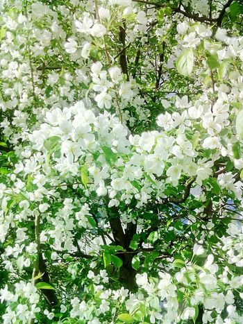 Growth Nature Backgrounds Flower No People Freshness Beauty In Nature Day Tree