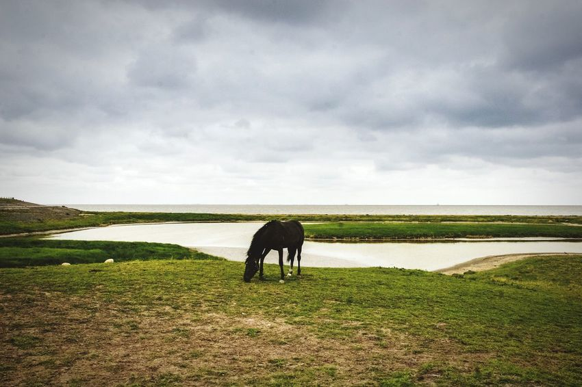 Landscape_Collection Dutch Landscape Landscape Horizon Holland Horse Horses