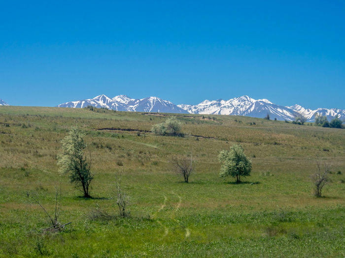 View of the mountains of Kyrgyzstan, as seen from the Almaty-Aktau railway in the Kazakhstan steppe Clear Sky Landscape Mountain No People Scenics - Nature Sky Snowcapped Mountain Steppe