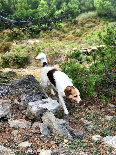 Aventurero Dog Nature DogLove Dog Love Dogs Of EyeEm Animal Themes One Animal Naturelovers Beauty In Nature Plants And Flowers Paisaje Natural