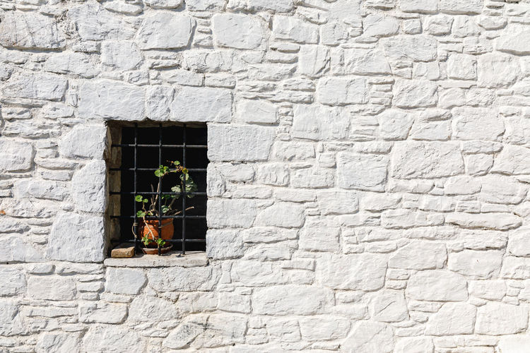 Potted Plant On Window Amidst White Wall