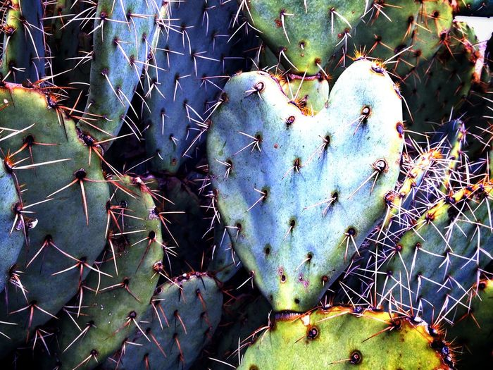 """""""Love hurts."""" Hiking in the McDowells. Prickly Pear Beauty"""