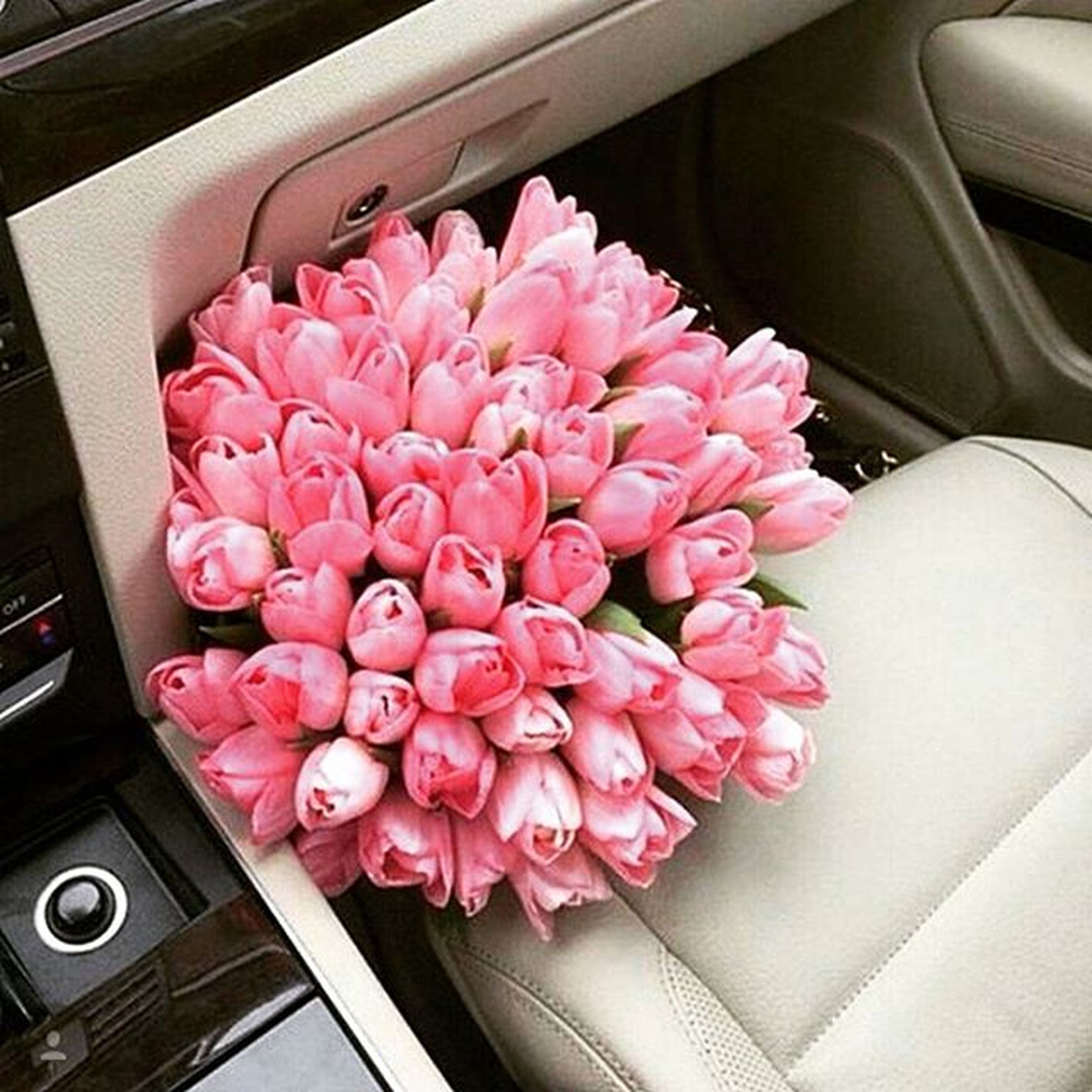 flower, indoors, high angle view, transportation, pink color, close-up, land vehicle, freshness, car, mode of transport, fragility, no people, nature, growth, glass - material, day, beauty in nature, vehicle interior, petal, window