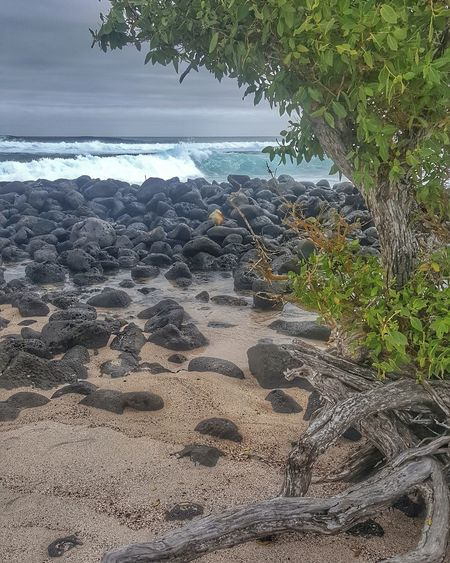 Beach Water Nature Sea Sand Outdoors Day No People Tranquility Tree Beauty In Nature Horizon Over Water Sky Close-up Beauty In Nature Landscape Nature Exploring Backpacker Adventure Rock - Object Tranquility Galapagos Islands Hiking Adventures Equator