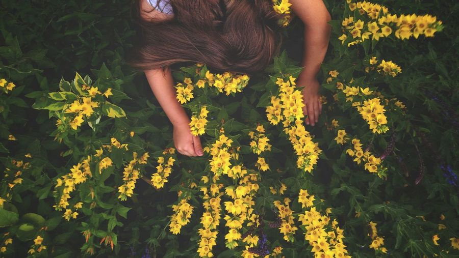 High Angle View Of Woman By Yellow Flowering Plants