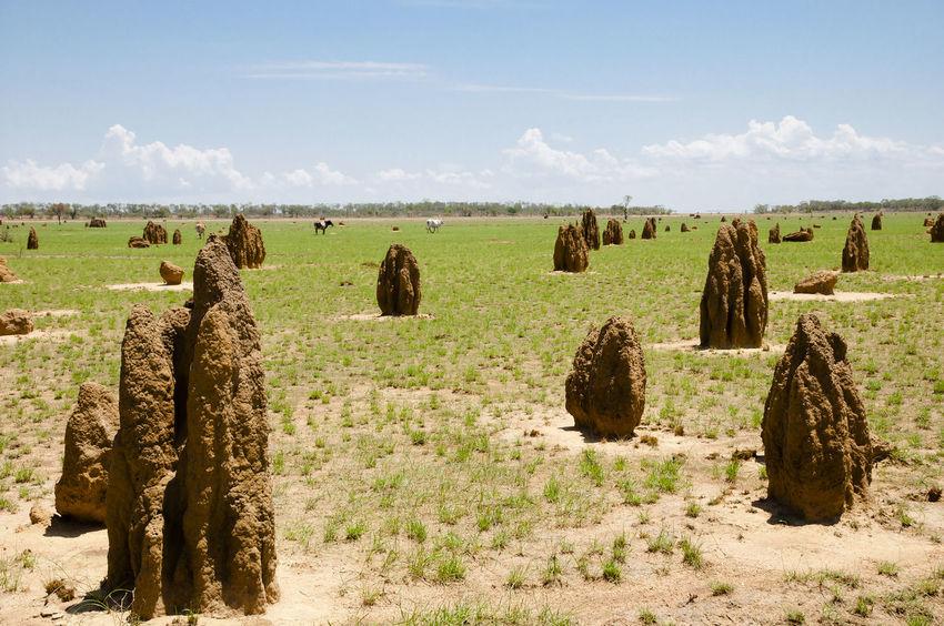 Termite Mounds - Kimberley - Australia Ant Hill Australia Kimberley Field Landscape Termite Termite Mound