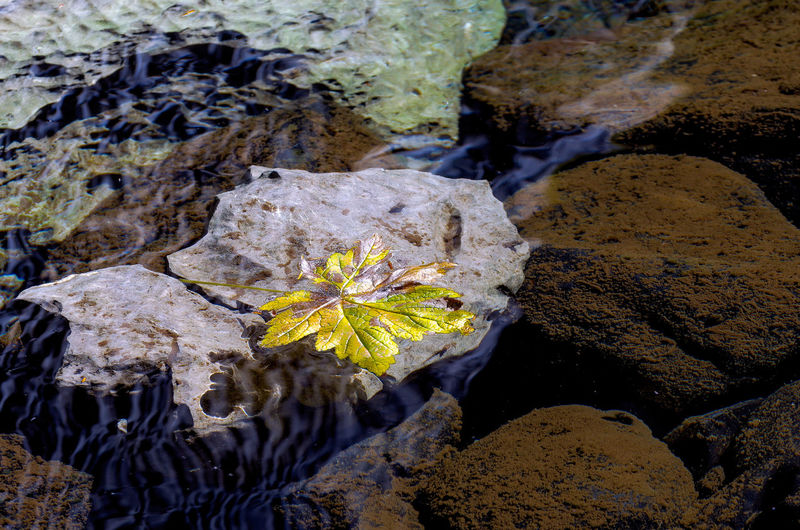 Maple Leaf Floating ina pool of water near Woss, British Columbia Plant Nature Beauty In Nature Leaf Plant Part No People Water Solid Rock Close-up Day Rock - Object Growth Yellow High Angle View Outdoors Vulnerability  Flower Fragility Leaves Cave Maple Leaf