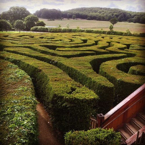 Lost Maze MazeRunner Maze Bush Green Green Green!  Looking For A Way Out Labrynth Looking Garden Photography Garden