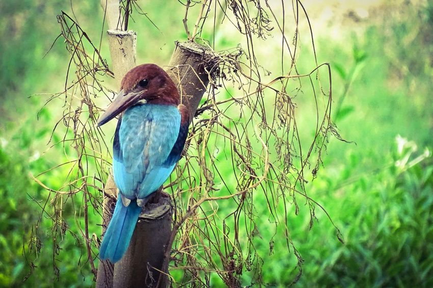 Bird Nature Beauty In Nature Long Beaked Bird New Delhi India Colorful Bird Atumn Colors Beauty