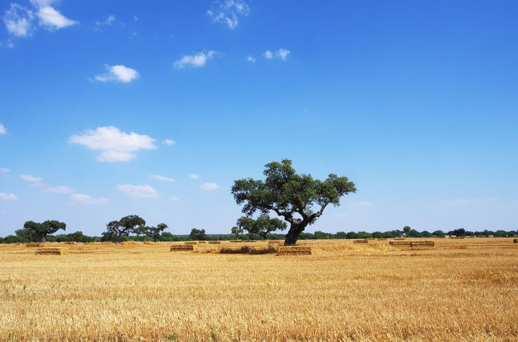Hay bales after harvest on the Extremadura region, Spain Extremadura Region, Spain Agriculture Cloud - Sky Field Landscape Nature Non-urban Scene Outdoors Rural Scene Scenics - Nature Sky Spaın Tranquil Scene