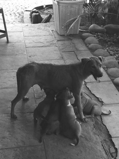 Dog❤ Puppy❤ I Love Dogs Mother Peace ✌