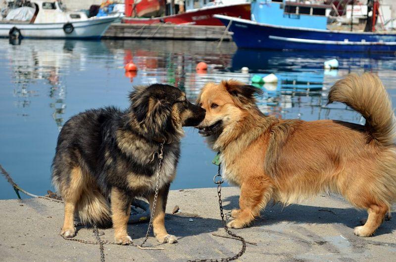 Dogs Cute Cute Pets Pets Friendship Game Time  Blurred Background Bokeh Bokeh Photography Nikonphotography EyeEm Pets