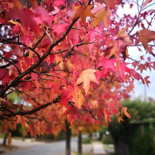 otoño Branch