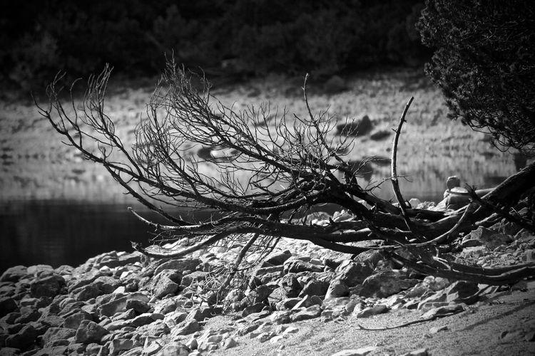 Wood Day Holz Kunst Nature Outdoors Tree Wald EyeEmNewHere