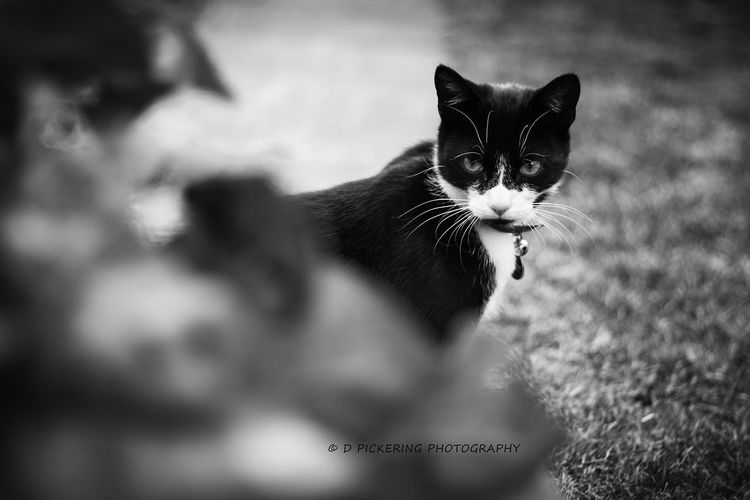 Sinister... Eye4photography  Black And White Collection  Bw_collection EyeEm Nature Lover