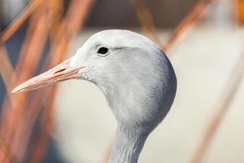 Bird of