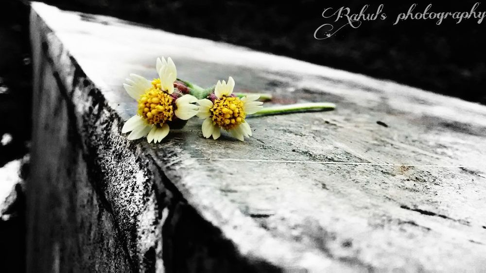 Rainy season flowers Rail Track Fouth Eyeemphoto
