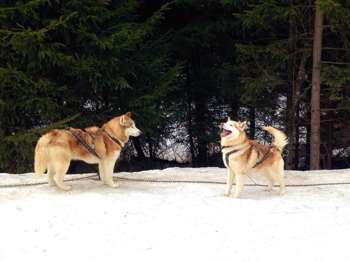 Dogs Dog Dogslife Dogs Of EyeEm Dog Love Dog❤ Winter Winter