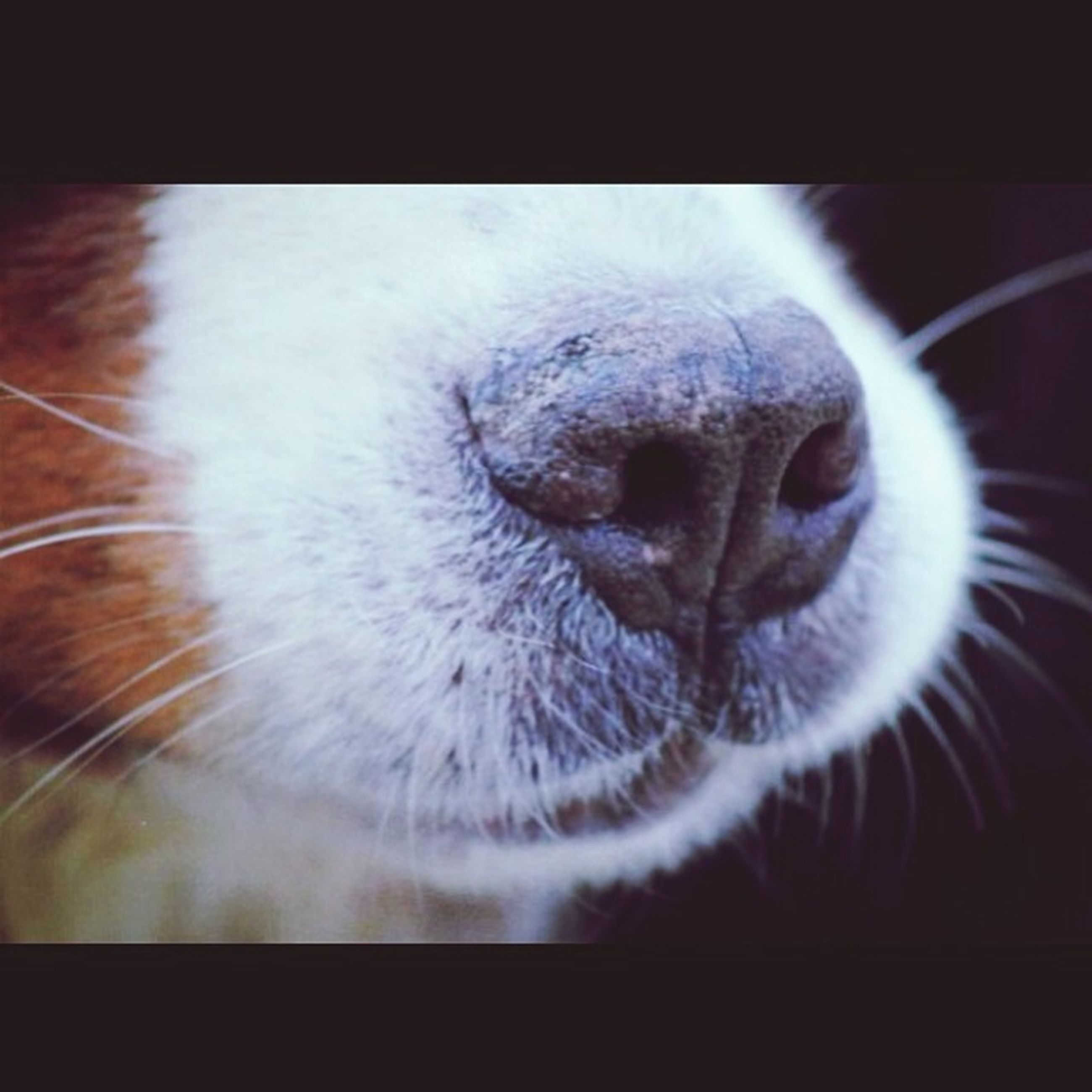 one animal, animal themes, pets, domestic animals, mammal, close-up, indoors, animal head, animal body part, dog, transfer print, auto post production filter, domestic cat, part of, animal nose, whisker, snout, no people, focus on foreground, animal hair