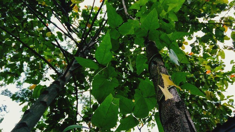 Nature Trees Tree Leaf Leafs