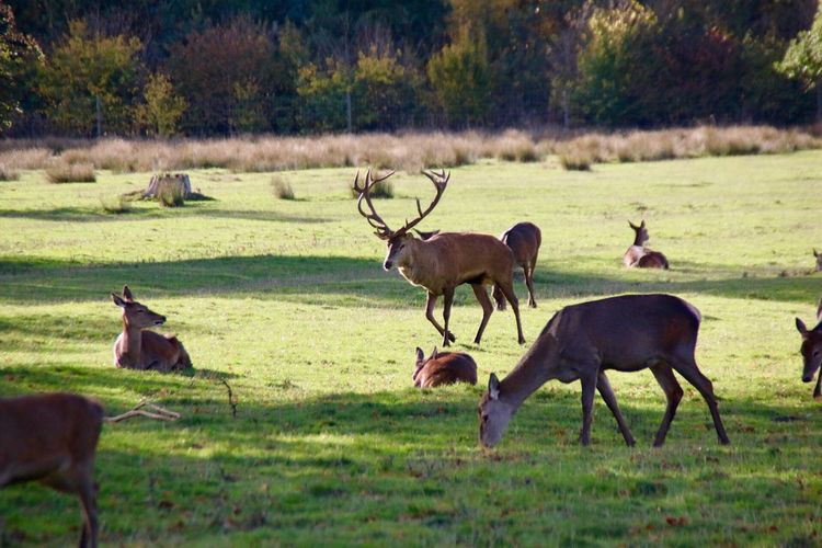 Lotherton Hall Group Of Animals Animal Animal Themes Animal Wildlife Deer Animals In The Wild Plant Grass Mammal Field Land Nature No People Day Landscape Domestic Animals Herbivorous